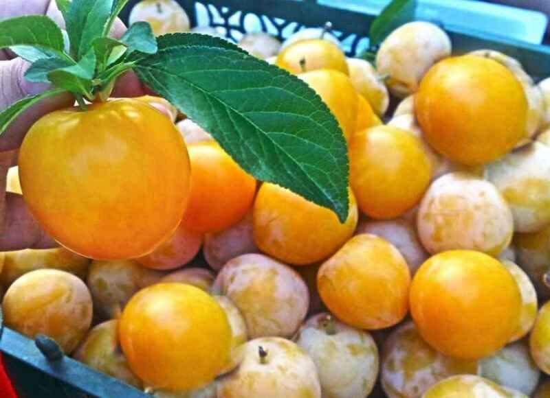 53 هزار تن محصولات کشاورزی گلستان صادر شد