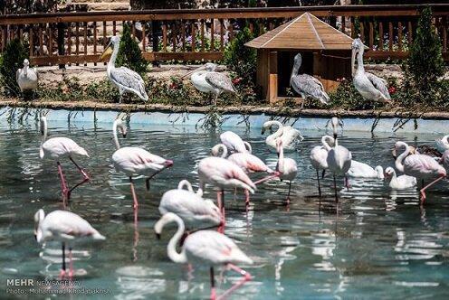 باغ پرندگان قم به زودی افتتاح می گردد