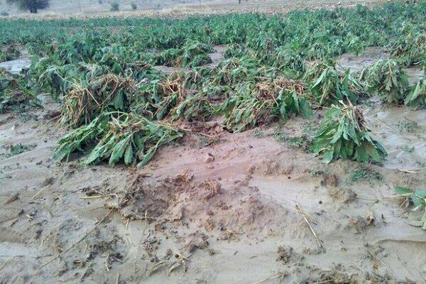 طوفان و سیل 3 هزار میلیارد ریال به کشاورزی فارس ضرر زد