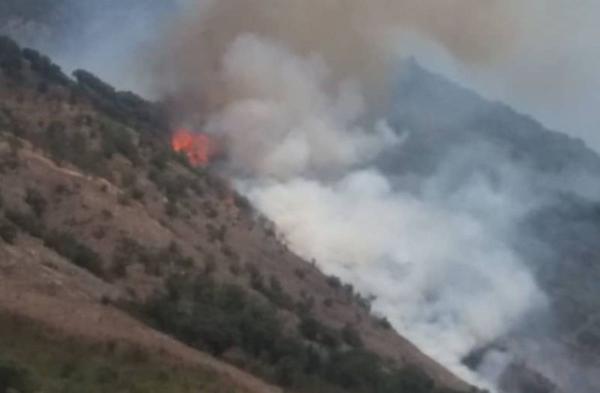 آتش سوزی در جنگل های گالیکش